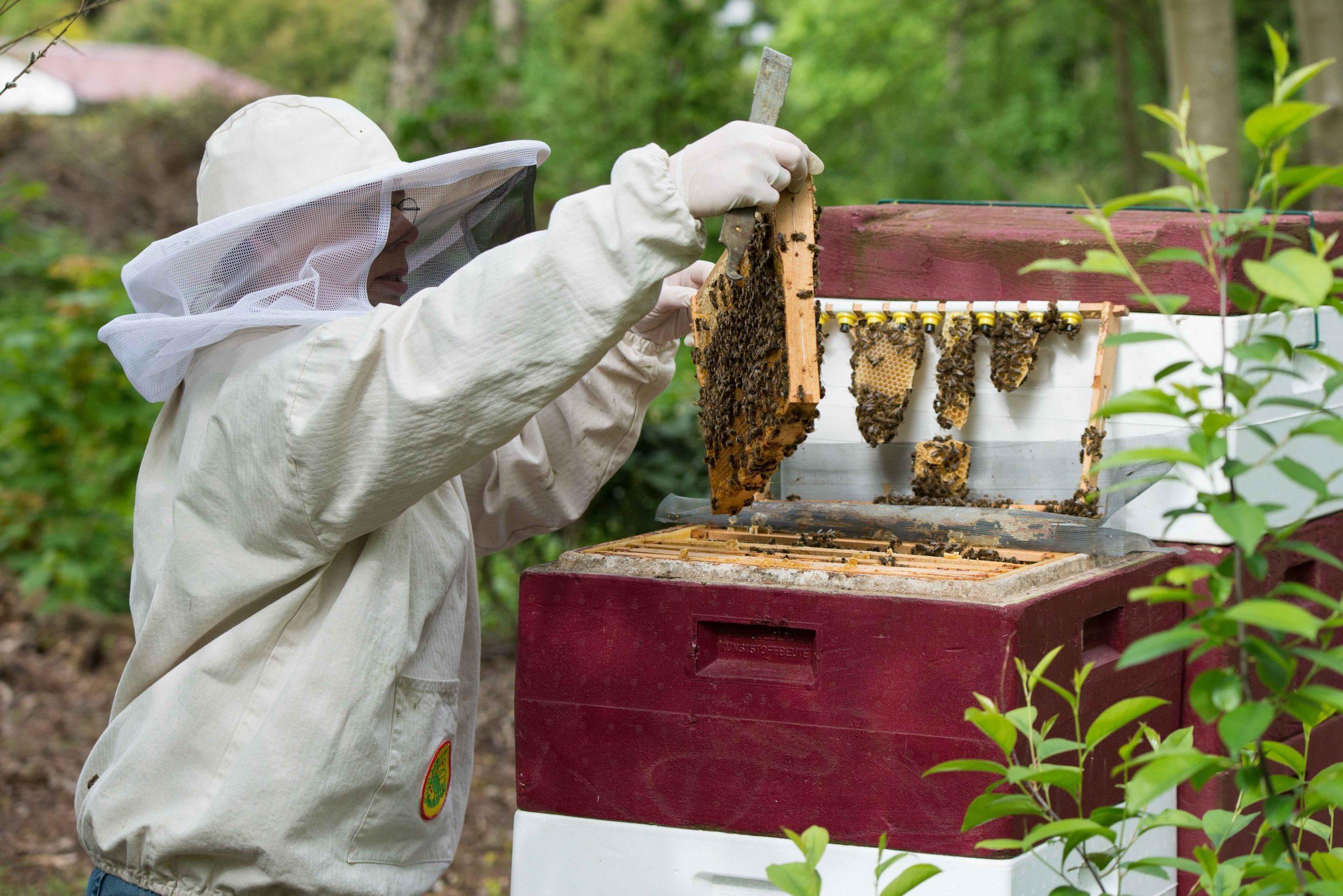 Bienenentdeckertour
