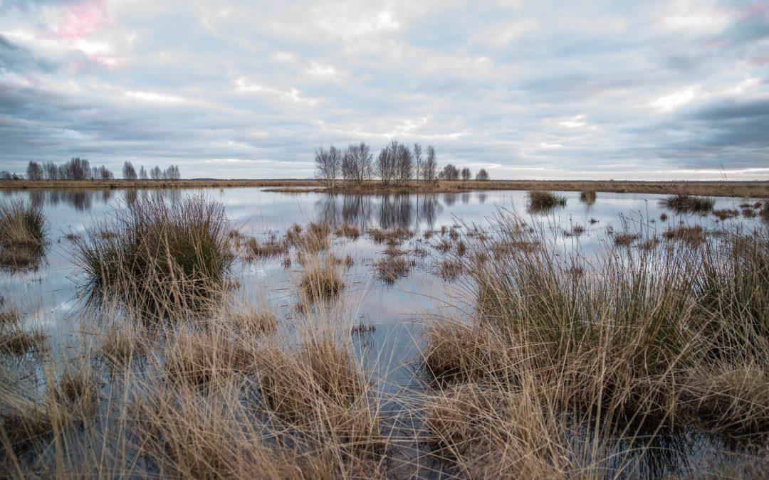 Naturpark Moor – Veenland