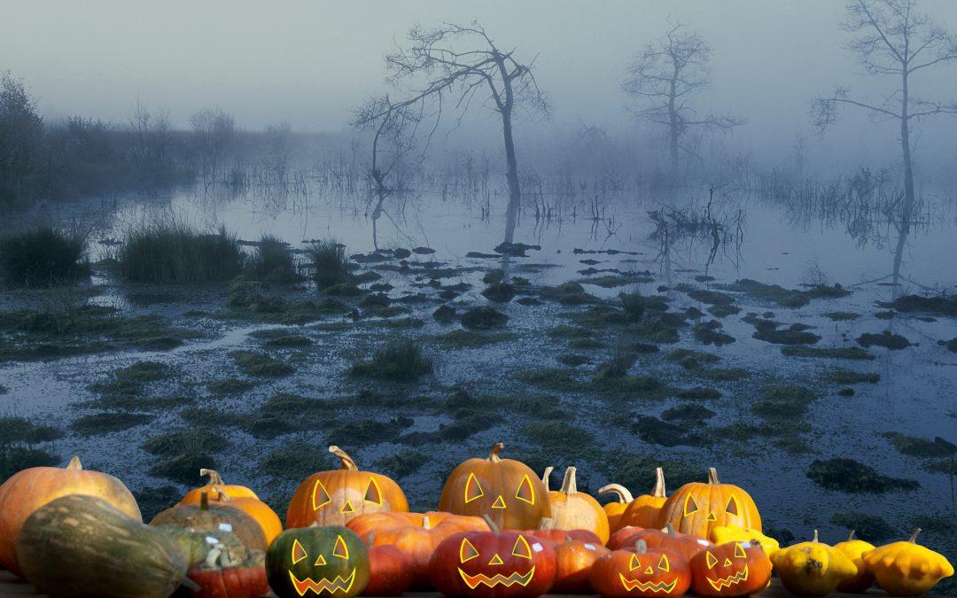 Buntes Herbstferienprogramm am Emsland Moormuseum