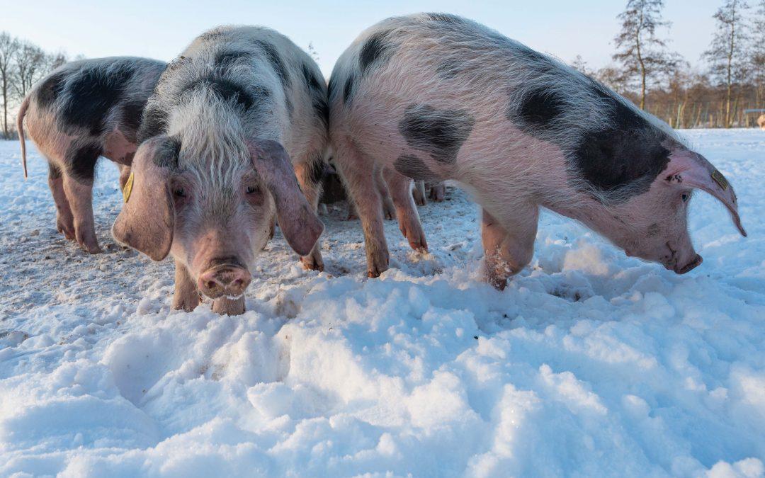 Versorgung der Tiere – der Siedlerhof im Schnee